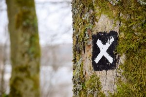 x marks the spot on tree in forest targeting an audience